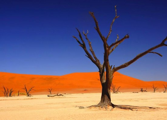 Deadvlei: Dead Vlei ... arbre mort