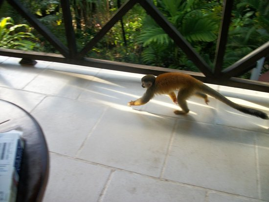 Falls Resort at Manuel Antonio : Monkey on the balcony