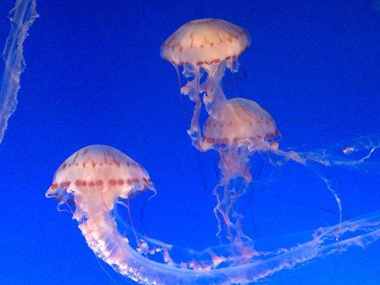 Jellyfish - Picture of Monterey Bay Aquarium, Monterey ...