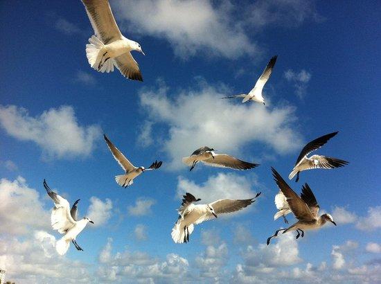 Premiere Hotel: Pássaros na praia a 50 metros do Hotel Premiere