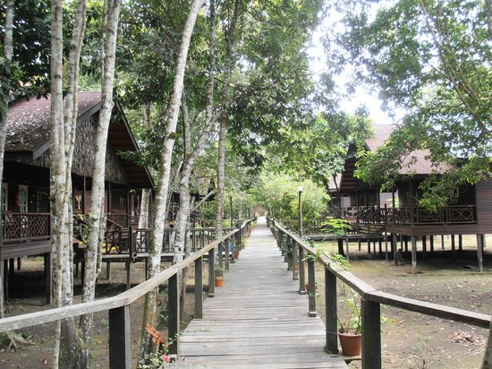 Kota Kinabatangan, Μαλαισία: Boardwalks to the rooms/lodges