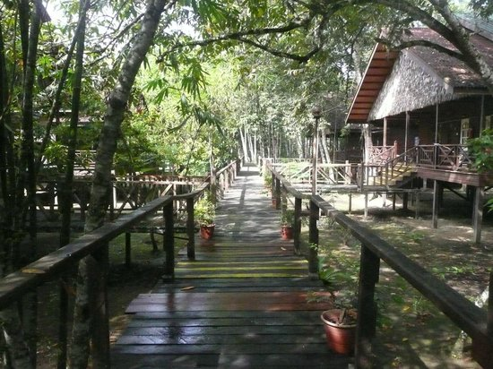 Bilit Rainforest Lodge: Boardwalks connect everything