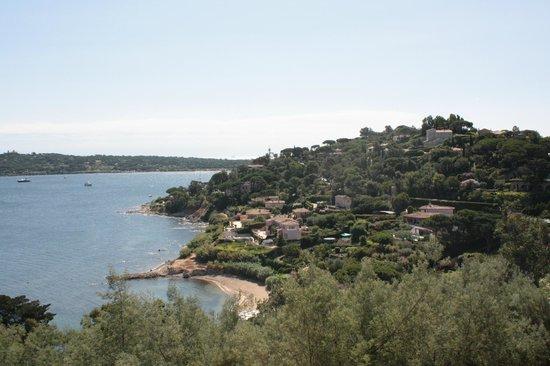 St. Tropez Harbor : St Tropez