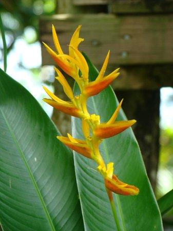 Pension Tupuna: Fleur du jardin!