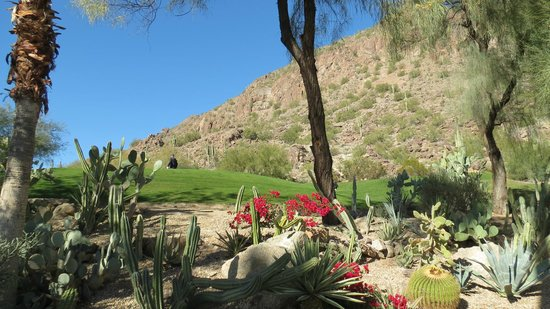 The Phoenician, Scottsdale: Cactus Garden and golf course by Camelback Mtn