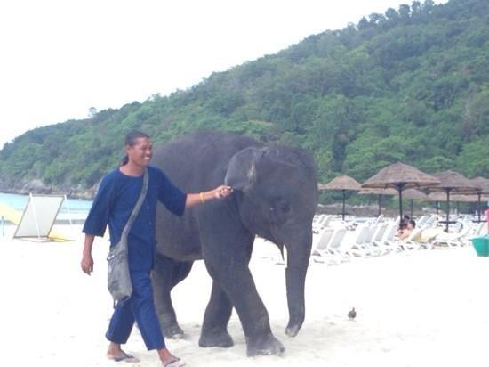 Le Meridien Phuket Beach Resort : El elefante!