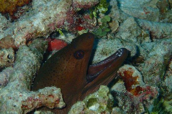 West Coast Divers : Similan
