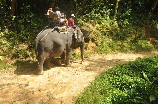 สยาม ซาฟารี: Elephant Trekking