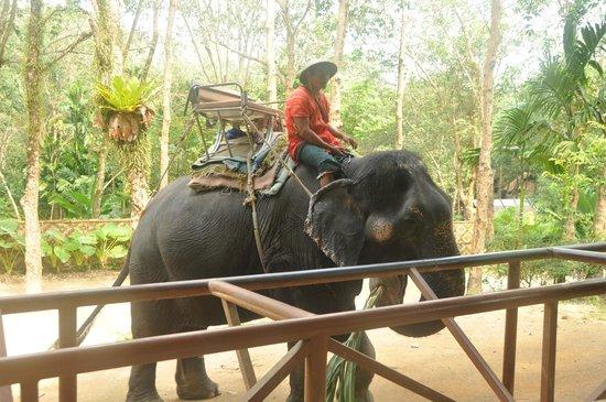 """Siam Safari: Our """"driver"""""""