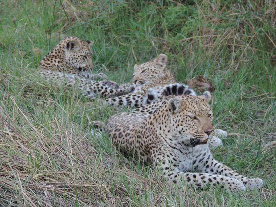 Sanctuary Stanley's Camp: mother and cubs