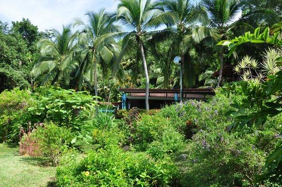 Costa Paraiso: Das Hotel vom Garten aus