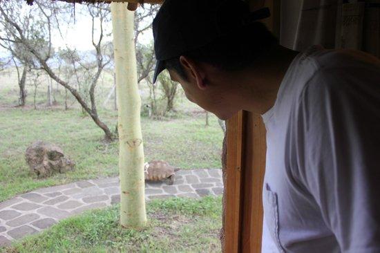 Chui Lodge: Resident Turtles