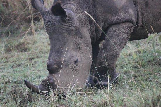Chui Lodge: See rhinos...