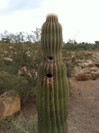 Sheraton Grand at Wild Horse Pass : Cactus