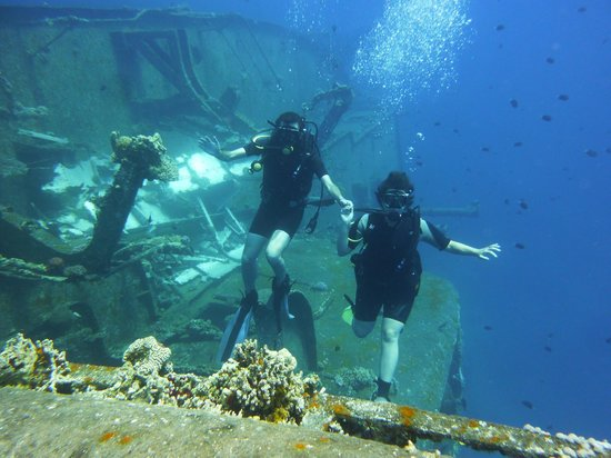 Reconstruction coral reef picture of aqaba international for Aqaba dive