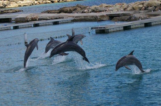 Rancho El Sobrino Curacao: Delphinschwimmen