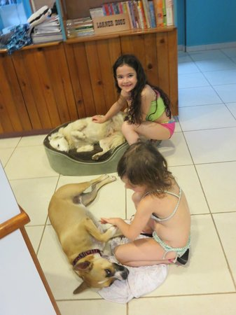 Guavaberry Spring Bay Vacation Homes : Free dogs to pat