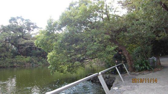 Ose no Kamiike Pond: 神池1