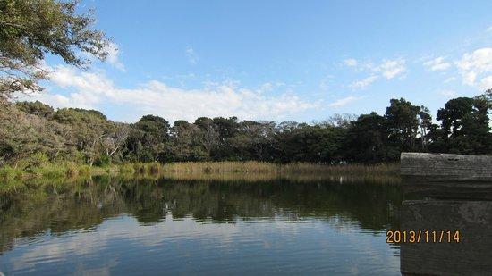 Ose no Kamiike Pond: 神池13