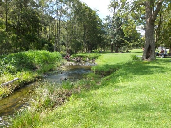 O'Reilly's Canungra Valley Vineyard Vintage Restaurant: The good place to picnic