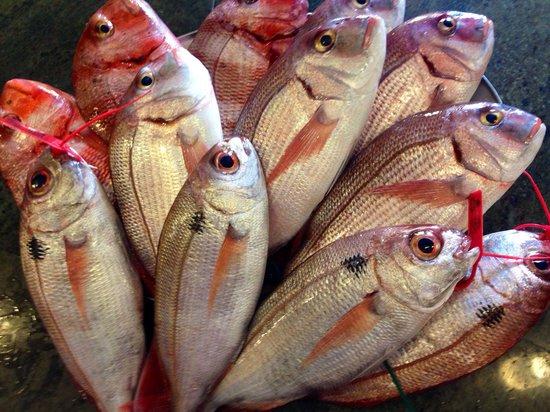 Marisqueria Jacinto: Pargos,urtas y besugos voraz