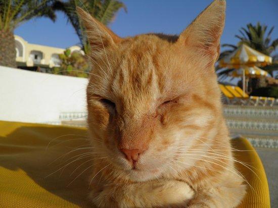 Djerba Holiday Beach : tout le monde prends le soleil