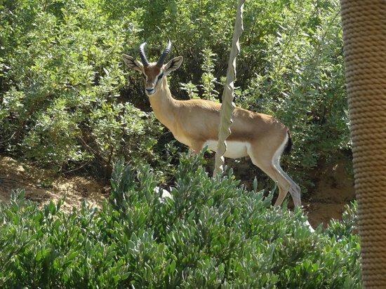 Al Maha, A Luxury Collection Desert Resort & Spa: Tierbeobachtung