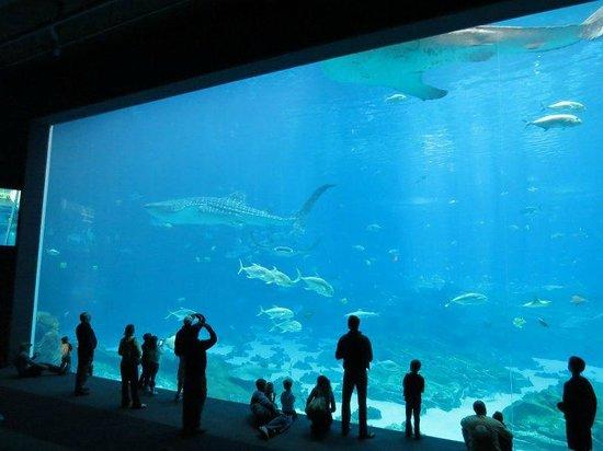 Georgia Aquarium Picture Of Georgia Aquarium Atlanta