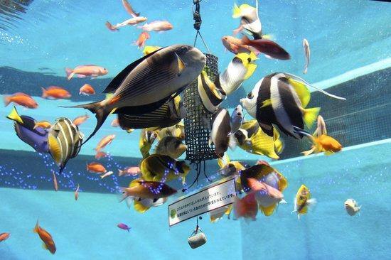 Hakoneen Aquarium