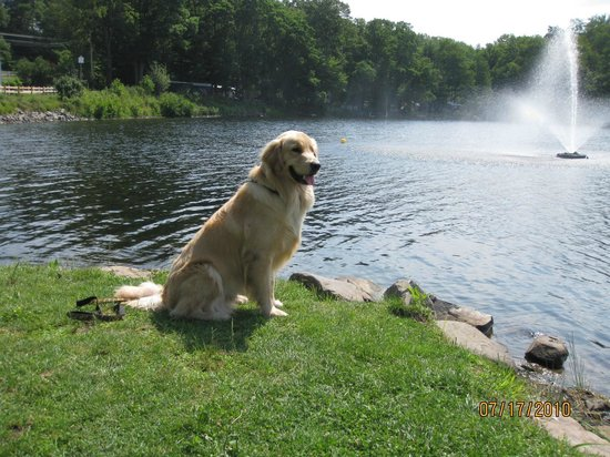 Keen Lake Camping and Cottage Resort : We are a Pet Friendly Resort