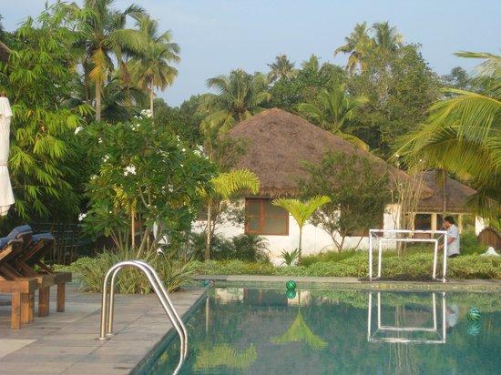 Deshadan Backwater Resort : The pool area