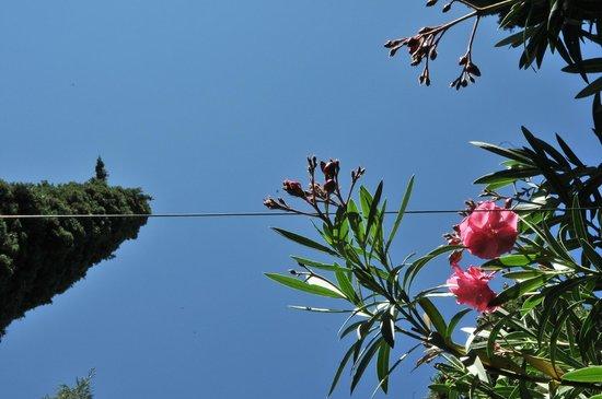 Museo de La Alhambra: piante favolose