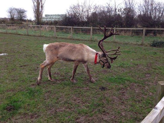 National Forest Adventure Farm: Santas Reindeer