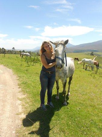 Honeywood Farm: we loved riding