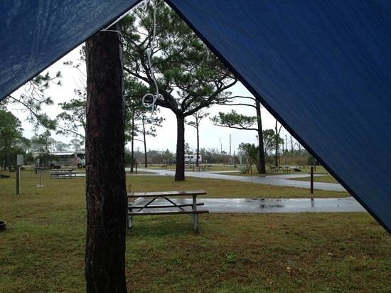 Gulf Islands National Seashore: Campground view from inside my tent.