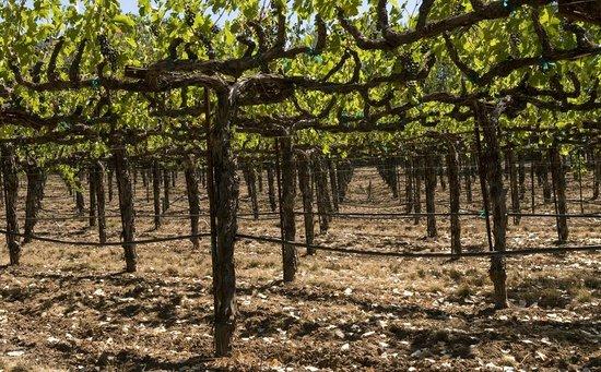 Auberge on the Vineyard: Endless views of beautiful vineyards