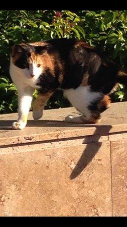 Hilton Dalaman Sarigerme Resort & Spa : neutered cat 24 hrs after the operation