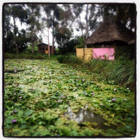 Lily Pond Arts Centre: Beautiful lily ponds
