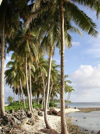 Equator Village : Пальмы на перешейке между островами