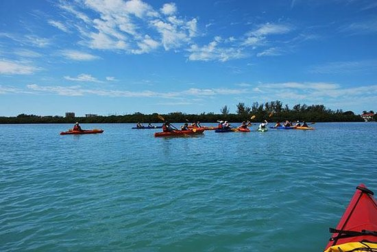 Adventure Kayak Outfitters : Sarasota Kayak Tour