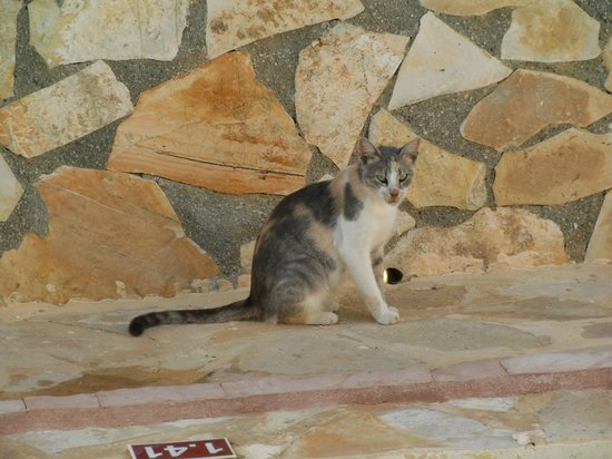 Mavrikos Luxury Villas - Romi, Klea, Kaly, Pearl: Our daily visitor!