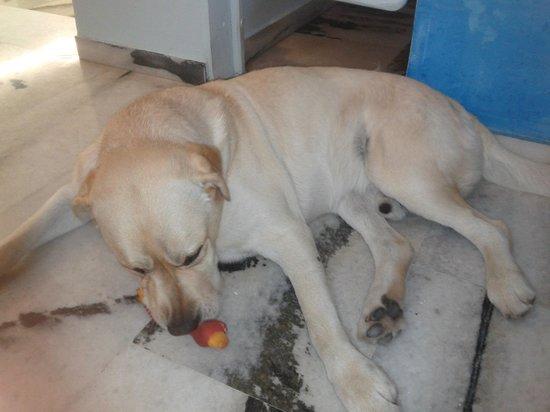 Anatoli Hotel : nice family dog