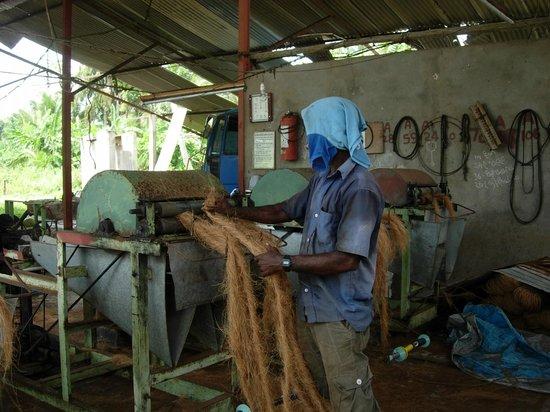 """VTS Lanka Tours: alte Seilfabrik (Seile aus Kokosnuss-""""Haaren"""")"""