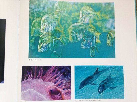 "Mote Marine Laboratory and Aquarium: Mote Aquarium from my book ""The Lure of Longboat Key"""