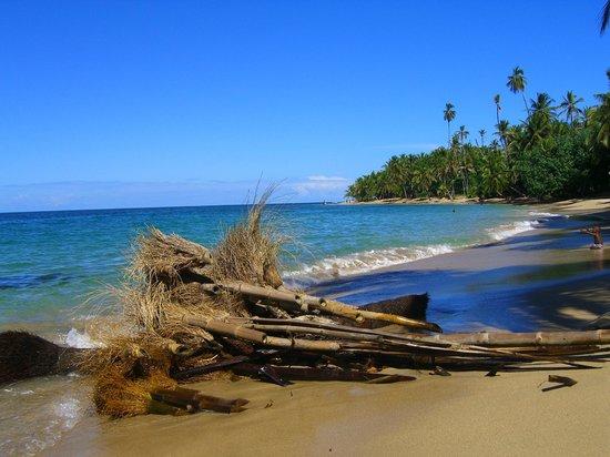 Physis Caribbean Bed & Breakfast : Best beach day ever at Punta Uva Beach!