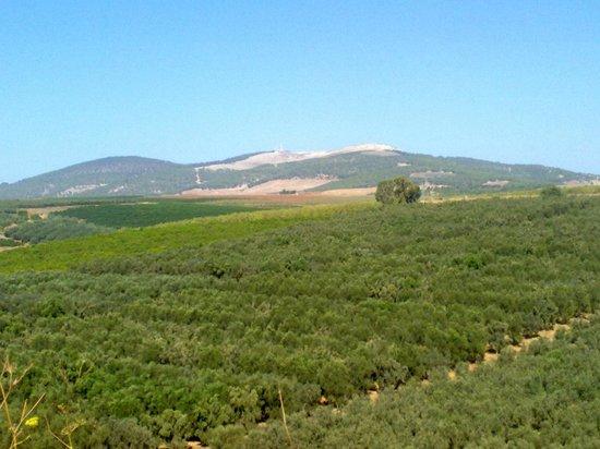 Vila Bakfar: Typical view