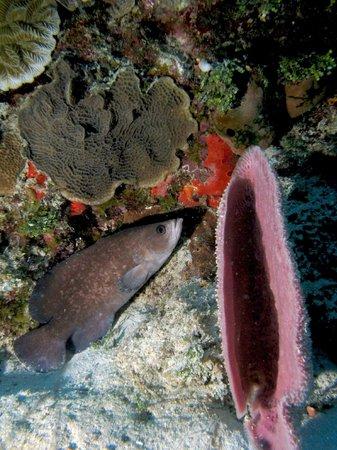 Aquanauts Dive Shop: soap fish