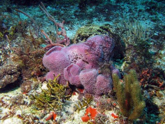 Aquanauts Dive Shop: sponges