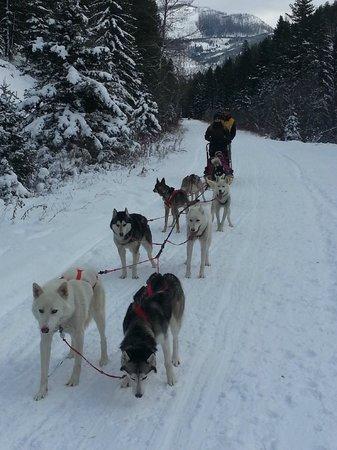 Absaroka Dogsled Treks: guest & guide on tandem sled