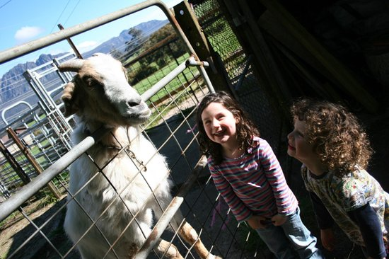 Carinya Farm Holiday Retreat: Bill the goat